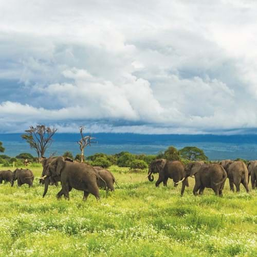 Elephants near Mount Kilimanjaro, Tanzania